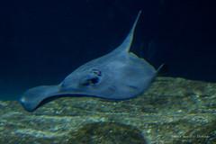 valencia 2016-107 (hiroke636) Tags: valencia mar peces oceano oceanografic
