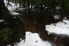 Day 6: Leaving Pine valley in melting snow (Gregor  Samsa) Tags: trip autumn trees snow fall water pine forest trekking trek river walking outdoors woods melting stream track outdoor hiking path walk may australia hike adventure trail journey valley tasmania melt footpath tracking overland meltingsnow pinevalley overlandtrack duckboard walkboard