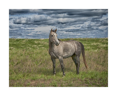 On the Lookout-Abandoned South Dakota (j_piepkorn65) Tags: wild horse animal southdakota greatplains dakotas