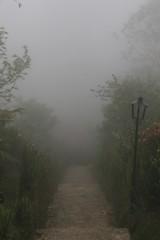 Escaleras a lo desconocido / Stairs to the unknown (Hesanz photography.) Tags: road trees mist lamp mxico forest canon eos rboles day camino bosque farol puebla da niebla lmpara cuetzalan 70d