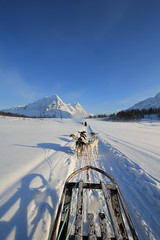 Lead the way (s a n y a) Tags: alps expedition norway landscape husky arctic snowcapped adventure trail northern dogsledding tromso