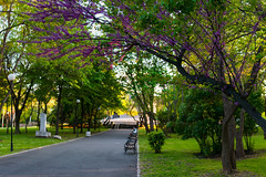 Springtime in the Park (Yoan Mitov) Tags: park light sunset tree green alley soft blossom bulgaria benches burgas blooming 2016
