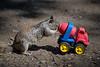 Squirrel VS The Chip Mobile (jimsheaffer) Tags: california nature animals squirrel kissing funny humor doritos frenchkissing animalbehaviour leocarrillo leocarrillostatebeach nikond750 leocarrillocampground