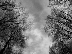 P4290343 (Andrey Narchuk) Tags: park portrait blackandwhite black spring moscow