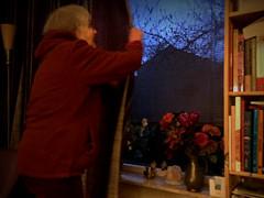 Closing the curtains (klaroen) Tags: de twilight nederland magnolia curtains buds closing insideoutside schemering knoppen gordijnen sluiten stoffen ploeg binnenbuiten