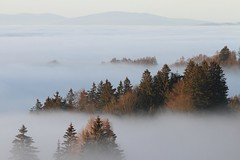 cloud forest - austria (dieter_turk) Tags: wood travel sky cloud mist mountains alps tree beautiful fog forest linz austria earth national obersterreich geographic vastness mhlviertel