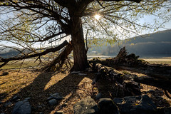 Lago di Campotosto, aspettando il tramonto (jimmomo) Tags: trees mountains alberi italia montagna abruzzo campotosto