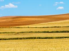 HappyMood.jpg (Klaus Ressmann) Tags: summer yellow landscape design spain wheat fields ochre klaus omd em1 castillaleon ressmann omdem1 flcnat klausressmann