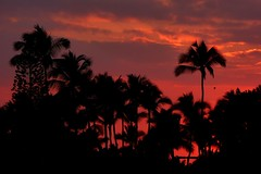 Kailua-Kona Sunset (Aneonrib) Tags: sunset vacation sky cloud sun tree nature colors silhouette clouds island fire hawaii big colorful outdoor dusk palm hawaiian hi kona global kailua colorandcolors kailuakona