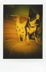 fuji instax mini 3- Floyd and Ivan (EllenJo) Tags: lomo fujifilm newcamera testshots instantfilm fujiinstax linstant fujiinstantfilm ellenjo lomographicsocietyinternational ellenjoroberts february2016