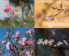 Naturey crap (Geza (aka Wilsing)) Tags: flowers nature nikon d750 blooms natureycrap tlzeissplanar50mm14 resttamron90mm28macro