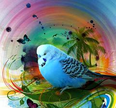 Tropicalism (jaci XIII) Tags: bird colors cores pssaro fantasy ave fantasia parakeet periquito tropicalism tropicalismo