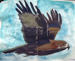 Wings (IrinaIrina) Tags: birds fauna sketchbook gouache