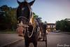 DSC_0122 (Promao80) Tags: lago tramonto cuba moron cavallo viaggio vacanza calesse