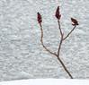 Sumac (Light Collector) Tags: winter snow ontario canada three collingwood georgianbay sumac floatingice theflickrlounge weeklythemepowerofthree