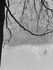 P1000808.edit1 (tcelli) Tags: trees winter bw snow ice mood frigid panasoniczs3