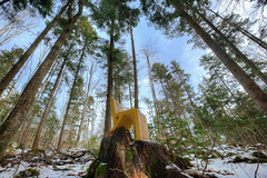 Irreversible Changes (smithmakaay) Tags: travel sky snow tree nature forest landscape nationalpark chair woods tara serbia giants balkan zlatibor perucac ef1635mmf28ii