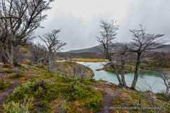 Laguna esmeralda - part 1 (Alberto Cassandro) Tags: trees patagonia mountains water argentina tierradelfuego ushuaia nationalpark nikon 2015 sigmalenses trendelfindelmundo d5200 reflexphotography albertocassandrophotography