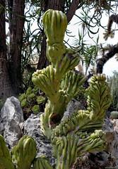 Monaco Exotic garden (Nemodus photos) Tags: monaco exoticgarden fz1000