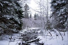 Open Water (BryanNewland) Tags: trees winter snow reflection water forest michigan brook upperpeninsula snowscape winterscape yooper baymills rezlife puremichigan baymillsindiancommunity