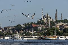 IstanbulTRK_4185 (Fabián Garcilita R.V.) Tags: city tourism turkey istanbul turismo turquia estambul