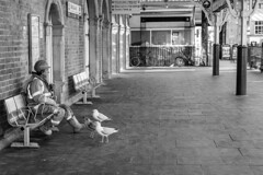 Undivided Attention (evans.photo) Tags: people station birds seagull aberystwyth ceredigion pest