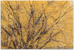 Winter's Orange (ctofcsco) Tags: 1500 1d 1div 200mm 2016 40 black canon color colorado contrast ef200mm ef200mmf2lisusm eos1dmarkiv eos1d explore f4 mark4 markiv orange pattern sanluisvalley supertelephoto telephoto texture tree unitedstates usa winter alligators co coloradogatorsreptilepark explored geo:lat=3770572325 geo:lon=10587029815 geotagged hooper mosca nature wildlife wwwcoloradogatorscom outdoor plant tangle best wonderful perfect fabulous great photo pic picture image photograph