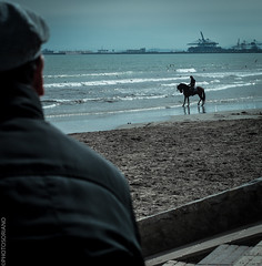 Look at the Rider (PHOTOSORIANO) Tags: sea sky horses beach valencia lumix 50mm nikon seagull horizon oldman g6 nikkor riders portsaplaya