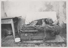 Dog laying in its bed (simpleinsomnia) Tags: old white black monochrome animal vintage found blackwhite bed antique snapshot photograph vernacular leash foundphotograph
