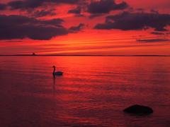 Ostsee.jpg (Tini X) Tags: abendrot grosschwanensee lübecker bucht meer ostsee schwan sonnenuntergang timmendorfer strand travemünde wasser dämmerung ozean himmel heiter outdoor