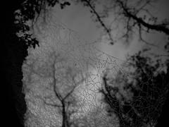 Through The Web ([Alan]) Tags: trees bw white black silhouette dark cobweb