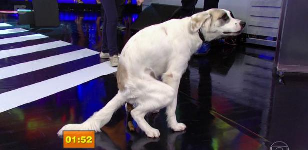 Ao vivo, cachorro faz cocô e dá trabalho à equipe de limpeza do Faustão