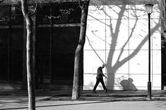Between trees (pascalcolin1) Tags: trees blackandwhite shadows noiretblanc arbres streetview ombres paris13 photoderue urbanarte photopascalcolin