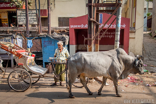 Hinduski Byk
