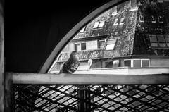 la sentinelle (kljam) Tags: street pigeon urbain