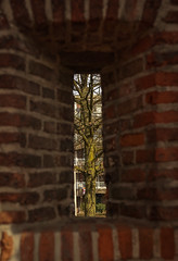 Tree (Matt H. Imaging) Tags: tree netherlands zeiss sony perspective nederland slt amersfoort sonyalpha sal1680z a77ii ilca77m2 slta77ii ilca77ii matthimaging