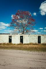 Rural Florida (corran105) Tags: old color tree abandoned rural colorful florida decay bluesky polarizer derelict ruralexploration rurex vsco vscofilm