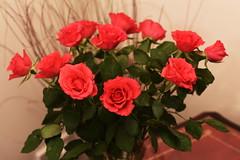 DSC_0786 (PeaTJay) Tags: flowers roses plants macro nature rose gardens fauna reading flora sigma indoors micro closeups berkshire rosebuds lowerearley nikond750