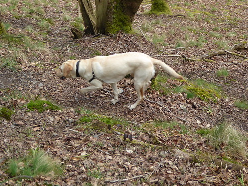 16 April 2016 Teign Valley walk (53)