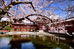 (Clonedbird  & Iris ) Tags: reflection japan spring nikon kyoto   sakura     2016        d810