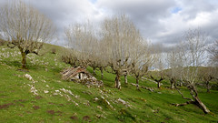 Saroia (Paulo Etxeberria) Tags: hut refuge bergerie hutte borda aralar majada enirio sheepfold chabola korta saroia uidui oidui