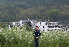 standing in a sea of flowers... (yvone042488) Tags: travel flowers white journey