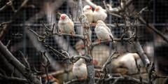 (099/16) Los pjaros de Vernica / Veronica birds (Pablo Arias) Tags: madrid espaa naturaleza photoshop spain aves pjaros hdr texturas photomatix nx2 paracuellosdejarama pabloarias
