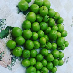 Salt it and eat it :) green plums sour and juicy. #fruit #plums #yesilerik fresh frm our garden (makeuptemple) Tags: our green garden juicy salt it fresh eat april 23 sour plums frm 2016 0342pm fruit yesilerik