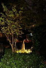 IMG_7789 (jalexartis) Tags: lighting nightphotography sun night dark outdoors aquarium outdoor aquatic basking aquatichabitat ybst yellowbelliedsliderturtles outdoorhabitat
