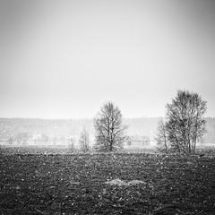 Takatalvi (mattias.ljunggren) Tags: bw snow tree monochrome barn spring sn lada trd vaasa vr vasa ker svartvitt sterbotten ostrobothnia sderfjrden sonya7 carlzeissjenajenazoomsuper75200f38