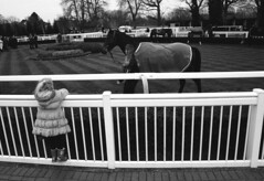 The Paddock (mrduncano) Tags: horse horseracing february racecourse racehorse paddock lingfield