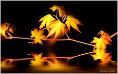 Reflection I (lukiassaikul) Tags: plants reflection nature leaves painting digitalpainting photopainting creativephotography floodeffect