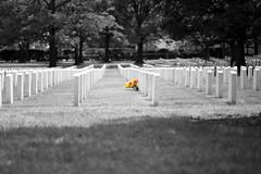 Till it's Gone (- FMD -) Tags: flowers bw flores flower blancoynegro cemetery graveyard arlington canon virginia blackwhite travels unitedstates cementerio flor 85mm desaturated estadosunidos 6d eeuu desaturado franphotography