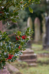 Cemetery Berries (dalalderson) Tags: red cemetery bristol berries headstone holly graves arnosvale